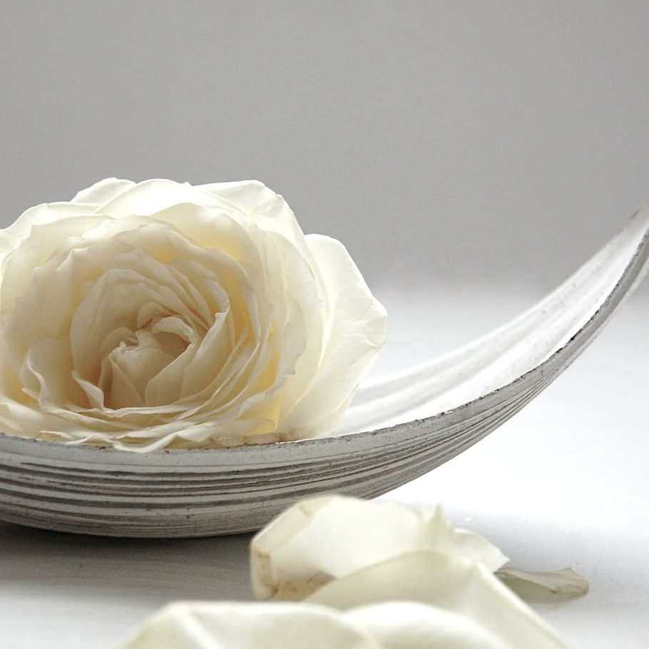 rose-white-still-life-blossom